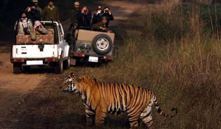 Night Safari to Sitabani